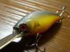 Basslog20070915c