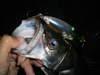 Basslog20071018a