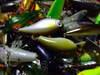 Basslog20071021a