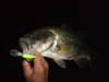 Basslog20071102a