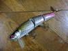 Basslog20071108a