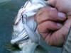 Basslog20071118d