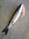 Basslog20071217a