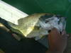 Basslog20071231b