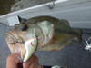 Basslog20080614b