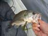 Basslog20080617d