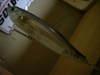 Basslog20080620a