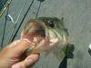 Basslog20080718a_2