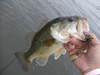 Basslog20081216c