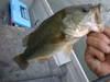 Basslog20100728a