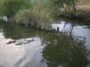 Basslog20100728c