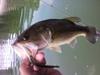 Basslog20100824a