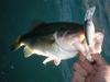 Basslog20101208c
