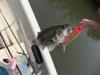 Basslog20110607a