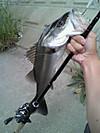 Basslog20120601a