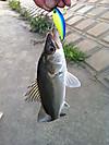 Basslog20121021a