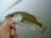 Basslog20060729c