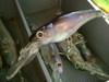 Basslog20070113b