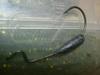 Basslog20070120