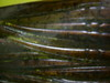 Basslog20070131b