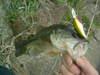 Basslog20070402b