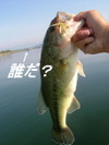 Basslog20070524b