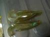 Basslog20070531d